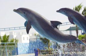 Aquaventuras_Park_Dolphins_Nuevo_Vallarta_Mexico