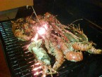 Hacienda_Patrizia_Lobster