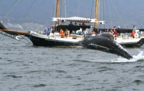 Pegaso_Charters_Vallarta_Whale_Watching