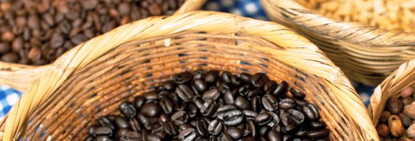 San_Sebastian_Jalisco_Coffee_Plantation