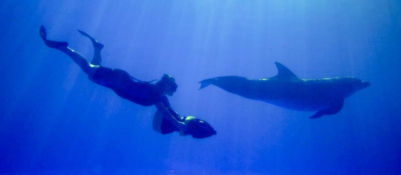 Vallarta_Adventures_Dolphin_Extreme_Swim