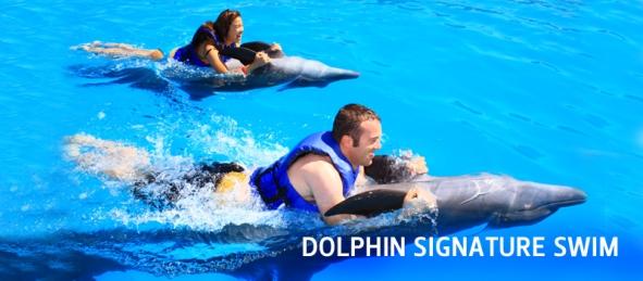 Vallarta_Adventures_Dolphin_Signature_Swim