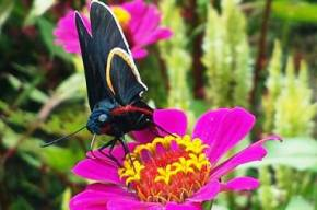 Vallarta_Botanical_Gardens_Flowers_Skipper